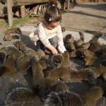 japan_squirrel_gardens_01
