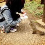 japan_squirrel_gardens_02