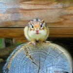 japan_squirrel_gardens_03