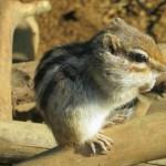 japan_squirrel_gardens_05