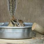 japan_squirrel_gardens_07