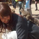 japan_squirrel_gardens_13