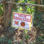 japan_squirrel_gardens_15