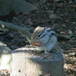 japan_squirrel_gardens_17