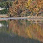 Сам пруд Хиросава к храму имеет слабое отношение. Обслуживает окрестные огороды и рисовые поля, снабжая их водой. Но пруд на диво красив, несмотря на свою утилитарность
