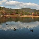 А это - уже пруд в саду храма Дайкаку-дзи. Пруд Осава-но икэ считается одним из самых старых в Японии, выкопан во время эпохи Хэйан в начале IX века по образу китайского озера Дунтин-ху. Рыжая полоса вдоль дальнего берега - высохшие остовы лотосов