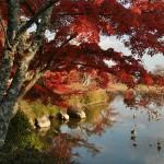 На пруду Осава есть пара островков. Один - Тэндзин-дзима, второй - Кикуга-сима