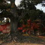 Маленький синтоистский храм на острове Тэндзин-дзима