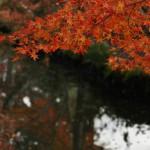 japan_daikaku_23