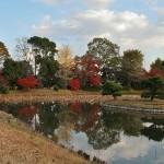 """Кругленькая блямба в пруду с двумя деревцами - Кикуга-сима и есть. Этому островку посвящена поэма Ки-но Томонори, входящая в сборник вака времен Хэйана """"Кокинсю"""": """"Мне казалось, цветок / над водой одиноко склонился, - / кто же это успел / посадить еще хризантему / там, на дне пруда Осава?.."""""""
