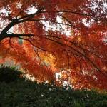 japan_daikaku_29