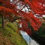 japan_daikaku_33