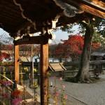 Оригинальные здания храма не сохранились. В самом начале периода Эдо император Го-Мидзуноо перенес на это место некоторые здания старого императорского дворца в Киото времен Момояма. Вот они и стоят тут сейчас