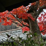 japan_ninna-ji_08