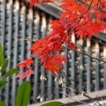 japan_ninna-ji_09