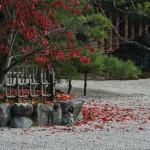 japan_ninna-ji_12