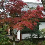 japan_ninna-ji_22