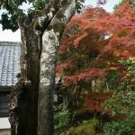 japan_ninna-ji_25