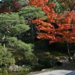 japan_ninna-ji_40