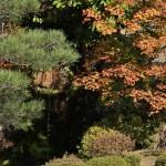 japan_ninna-ji_44