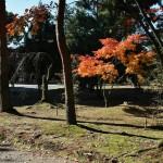 japan_ninna-ji_54