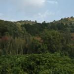 Автобусик бодренько тарахтит по местным горам и пригоркам. Можно дремать, можно любоваться окрестностями. Вполне себе среднеяпонские окрестности с горами, лесами и бамбуком. Осень еще только-только начинается (напоминаю: это снималось почти месяц назад)