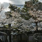 japan_ninna-ji_snow_12