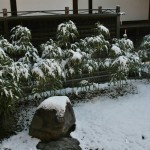 japan_ninna-ji_snow_14