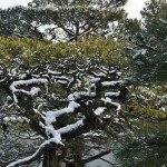 japan_ninna-ji_snow_22
