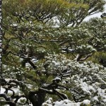 japan_ninna-ji_snow_32