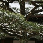 japan_ninna-ji_snow_45