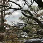 japan_ninna-ji_snow_53