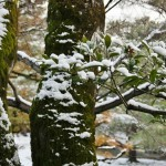 japan_ninna-ji_snow_54