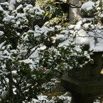 japan_ninna-ji_snow_55