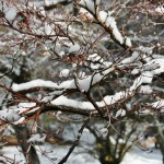 japan_ninna-ji_snow_59