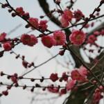 japan_baikasai_2014_069