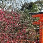 В храме цветет сливовое дерево