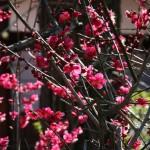 Цвет очень насыщенный и запах тоже