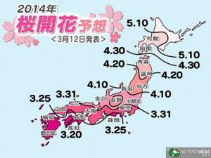 cherry-blossoms_sakura_report_01
