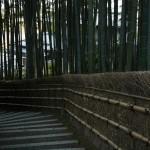 Тропа в бамбуковой роще от кладбища к храму
