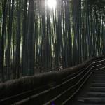japan_adashino_32