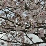 japan_arashiyama_2014_009