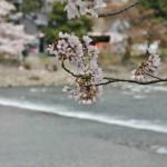 japan_arashiyama_2014_010
