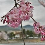 japan_arashiyama_2014_016
