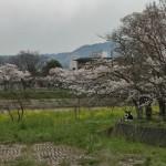 japan_arashiyama_2014_018