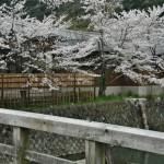 japan_arashiyama_2014_019