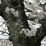 japan_arashiyama_2014_023