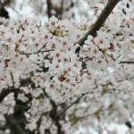 japan_arashiyama_2014_026