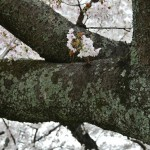 japan_arashiyama_2014_031