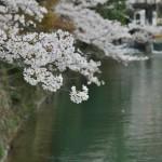 japan_arashiyama_2014_035
